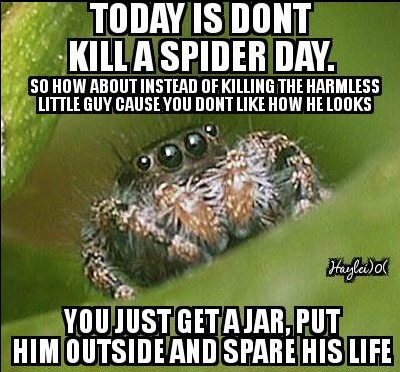 don't kill a spider